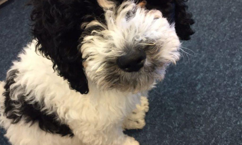 De kantoorhond is in opmars, maar de schoolhond bestaat ook!